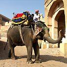 Working Elephant at Amber Palace, Jaipur India by Bev Pascoe