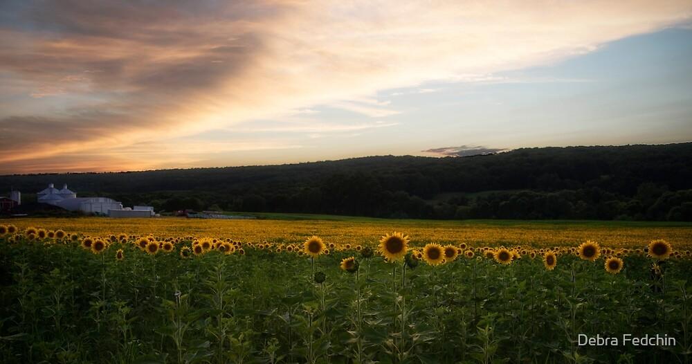 Sunset over a field of Sunflowers by Debra Fedchin
