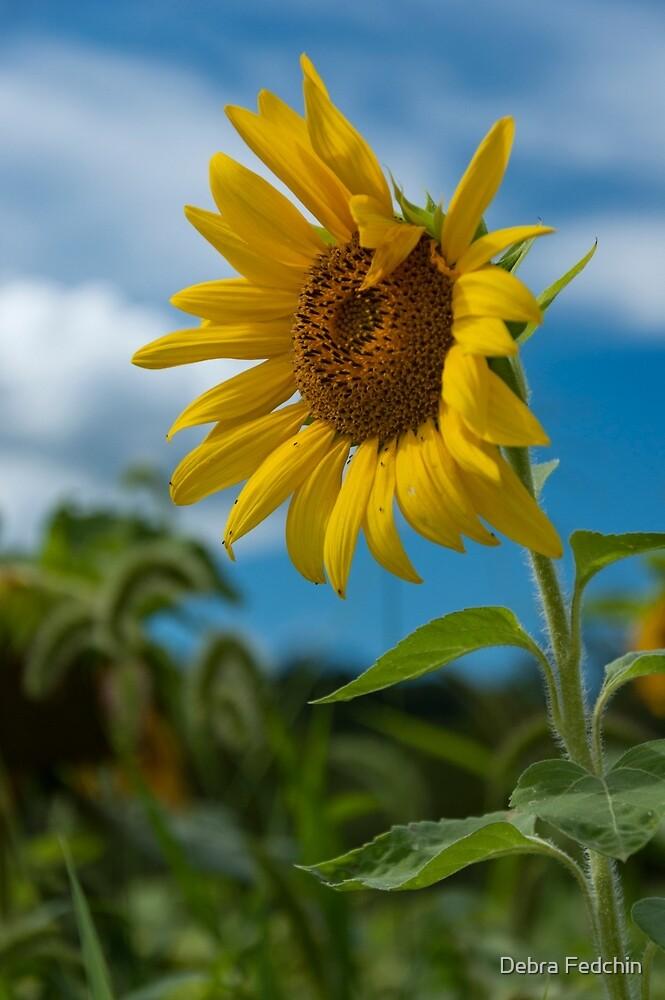 Sunflower and Blue Skies by Debra Fedchin