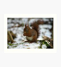 red squrril in winter Art Print