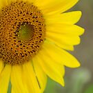 Blooming Sunflower #2 by Debra Fedchin
