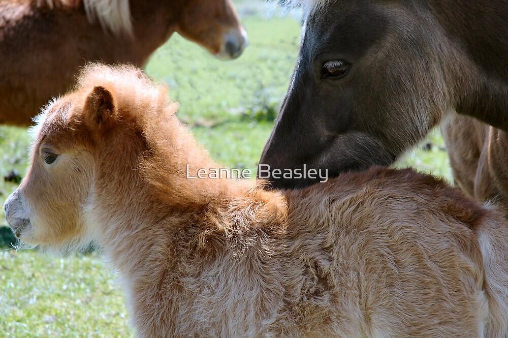fluffy baby by Leanne Beasley