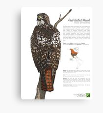 Red-tailed Hawk Infographic Canvas Print