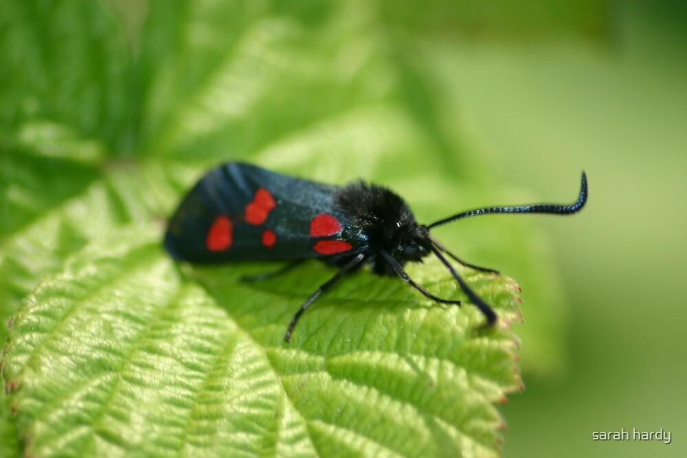 moth by sarah hardy