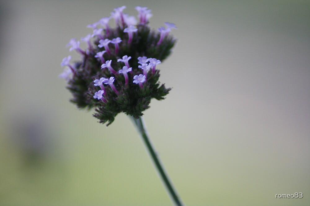 purple flower by romeo83