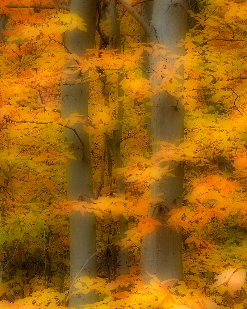 Fall Beech by Michael  Dreese