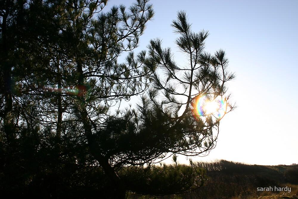 sun through the tree by sarah hardy