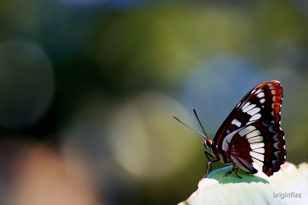 Butterfly by brightfizz