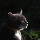 Profile of tabby cat with dark background by turniptowers