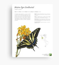 Western Tiger Swallowtail Infographic Canvas Print