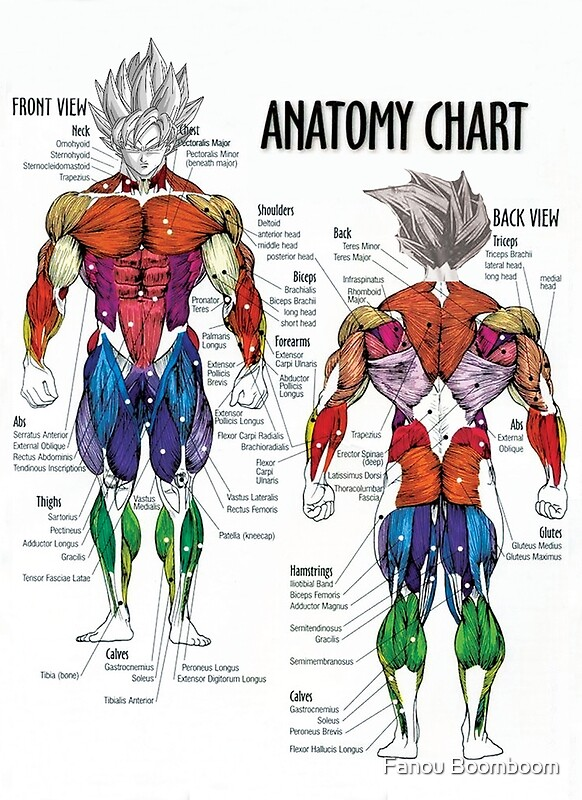 Muscle chart anatomy diagram for bodybuilders art prints by