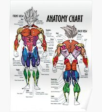 Muscle Chart - Anatomy Diagram For Bodybuilders Poster