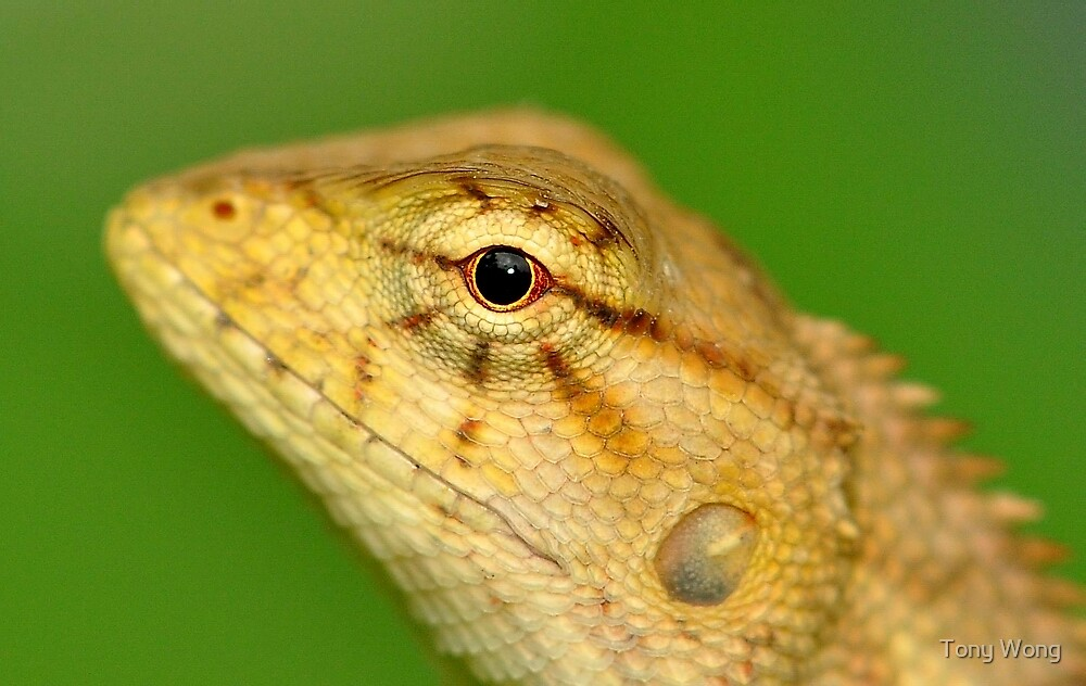 Looking at you  ? by Tony Wong