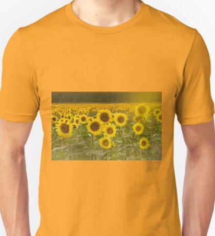 Sunlit field of Sunflowers T-Shirt