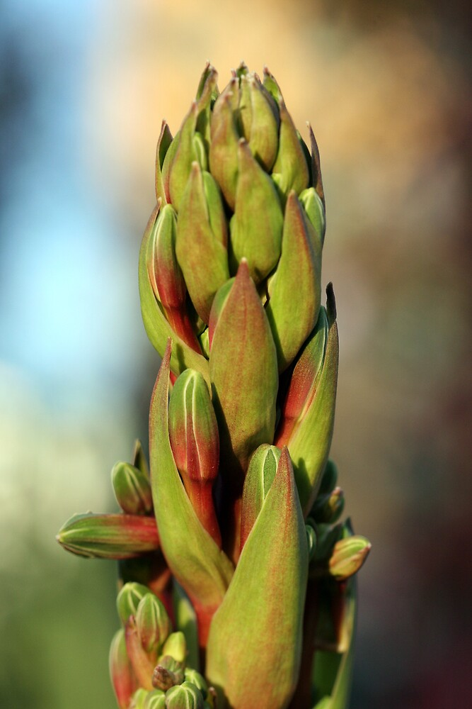 Flowers 5 by Mark Mair