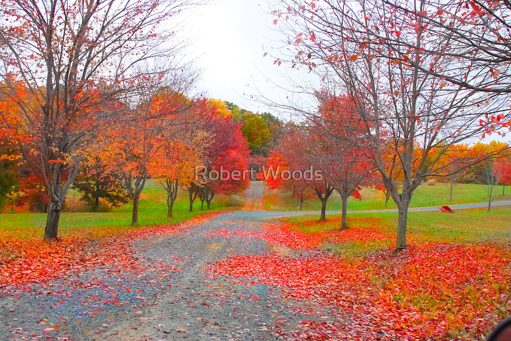 Colorful Lane by Robert Woods