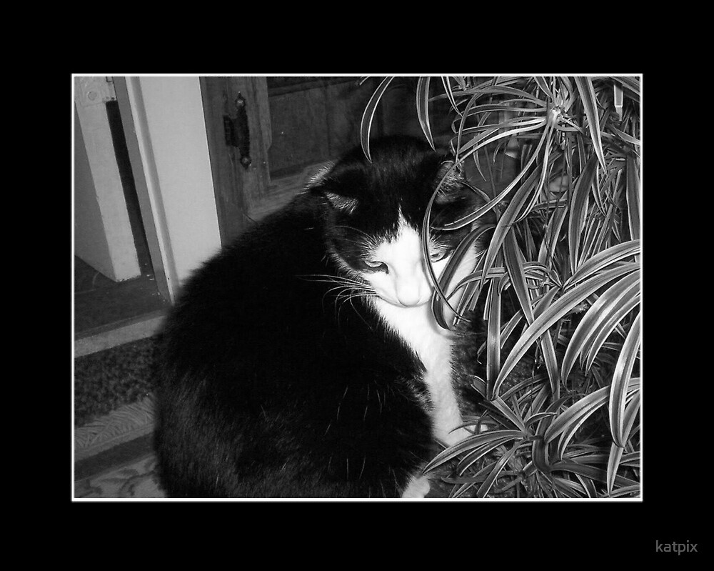 Kat and Spider Plant by katpix