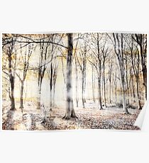 Whispering woodland in autumn fall Poster