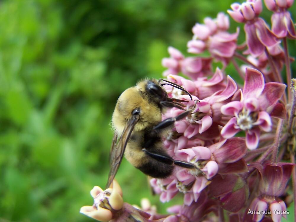 pollen collector by Amanda Yates