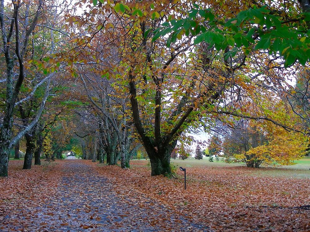 Tatalafquen  en otoño... by cieloverde