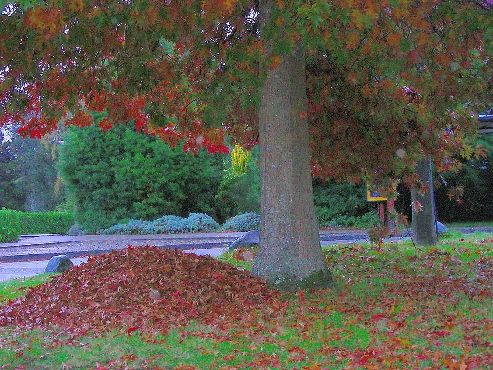 Recolección de hojas.... by cieloverde