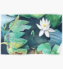 Water lilies - art by Adele Pelizzoni Poster