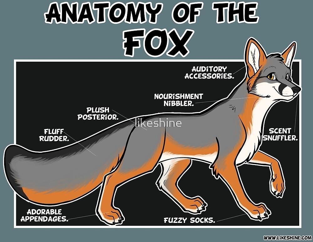 Anatomy of the Fox - grey by likeshine