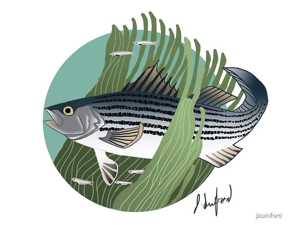Striped Bass  by jswinford