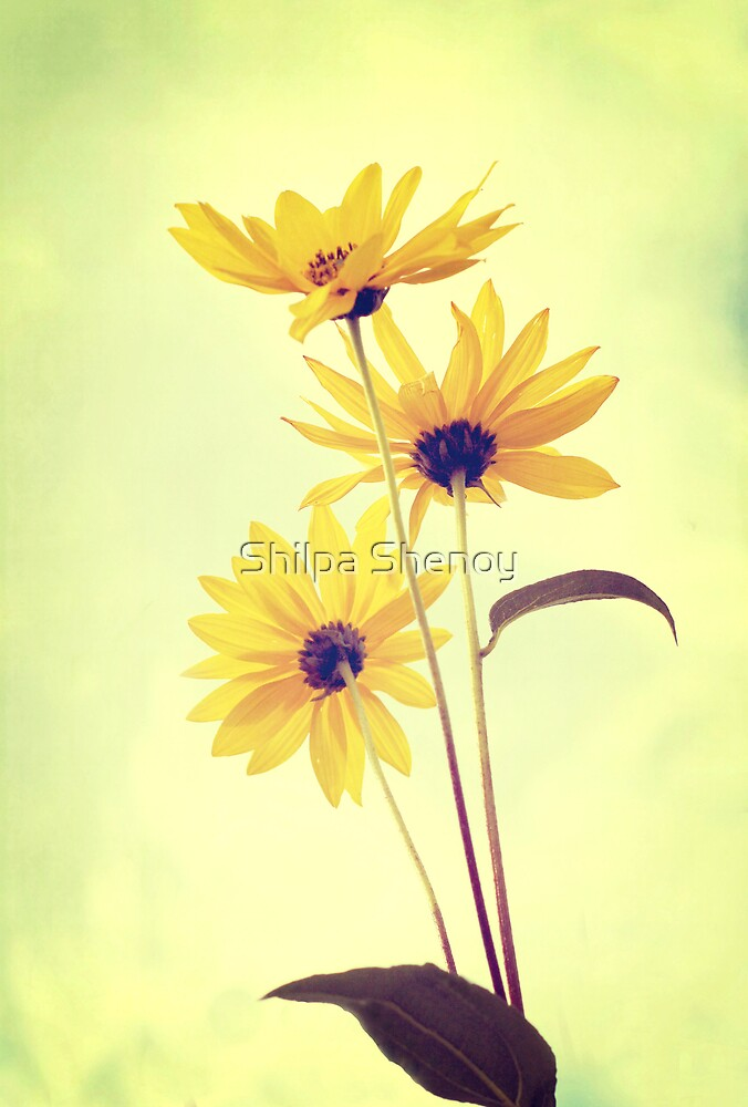 Love of beauty is taste, creation of beauty is art by Shilpa Shenoy