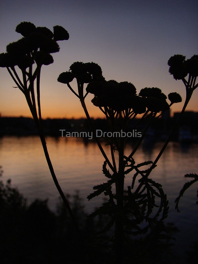 Tansy Silhouette by TingyWende