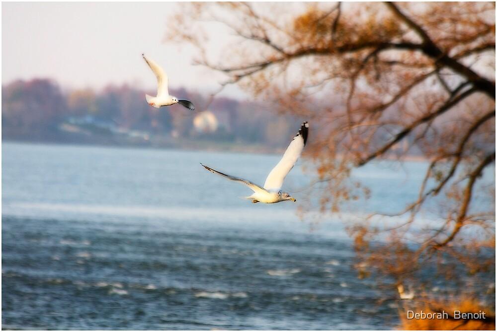 Seagulls In Canada by Deborah  Benoit