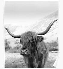 Porträt einer Hochlandkuh, Stierdruck Poster