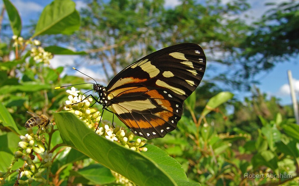 Large Tiger Butterfly by Robert Abraham