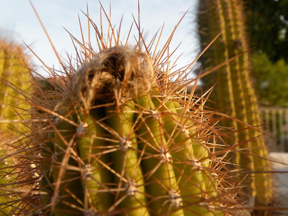 Mini -cactus!! by Bonnie Pelton