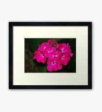 Delightful Pink Framed Print