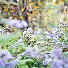 Blumenträume von Kendra Kantor