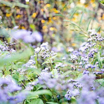 Flower Dreams by KendraJKantor