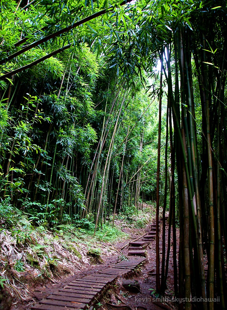 Bamboo Trail by kevin smith  skystudiohawaii