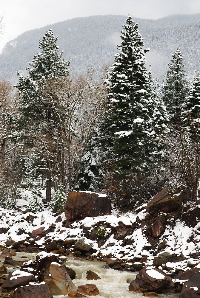 Snowy Woods by Linda J Armstrong