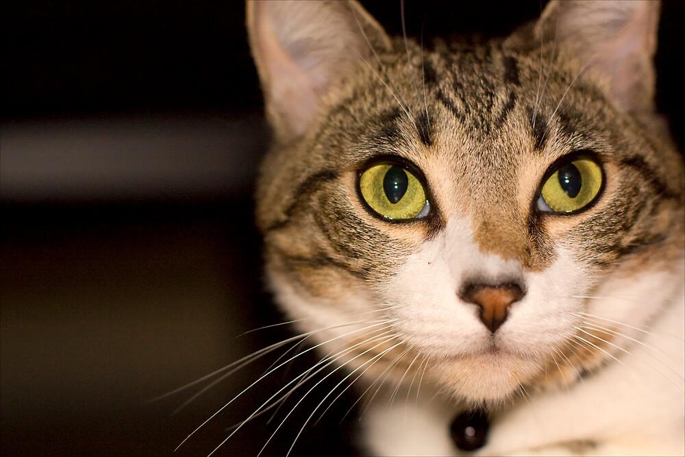 Cat Cat, a portrait by abcbigc