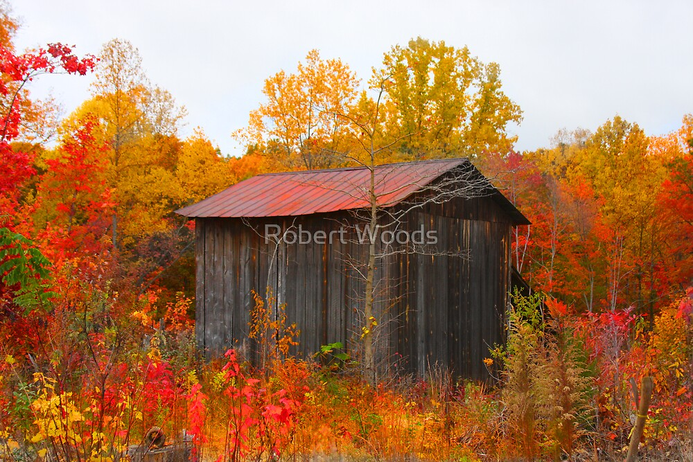 Old Shed on Old Hollow by Robert Woods