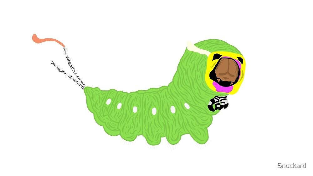 Puss Moth Caterpillar by Snockard