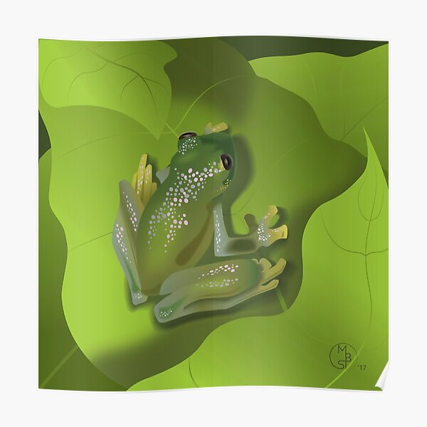 Green Glass Tree Frog Poster