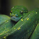 Closeup of Snake by emmabel