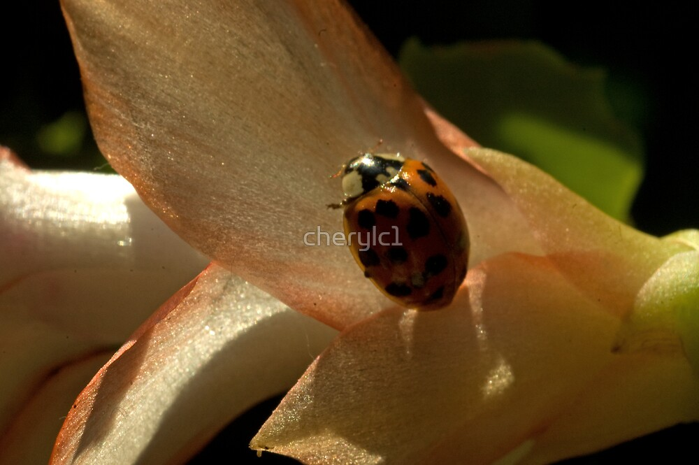 Ladybug by cherylc1