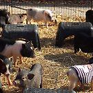 A Passel Of Pettable Pigs by WildestArt