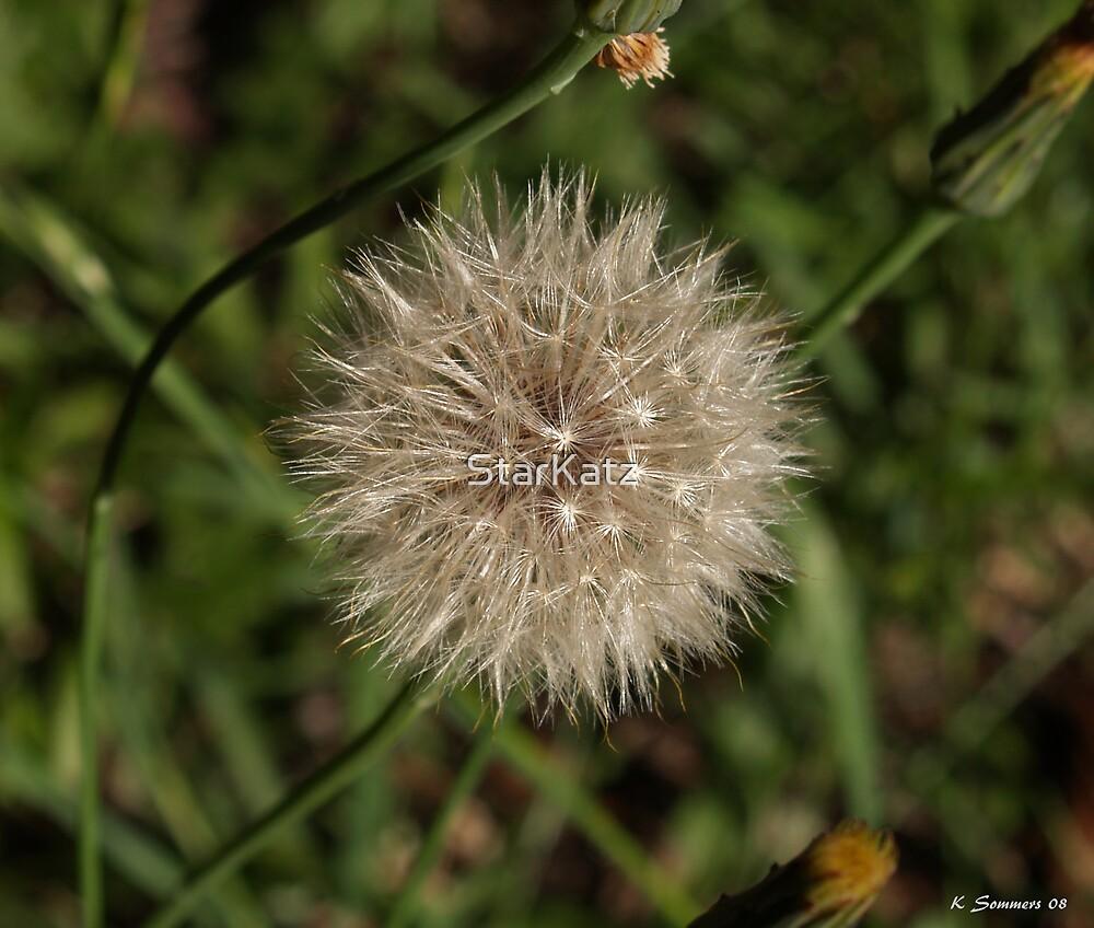 Dandelion by StarKatz