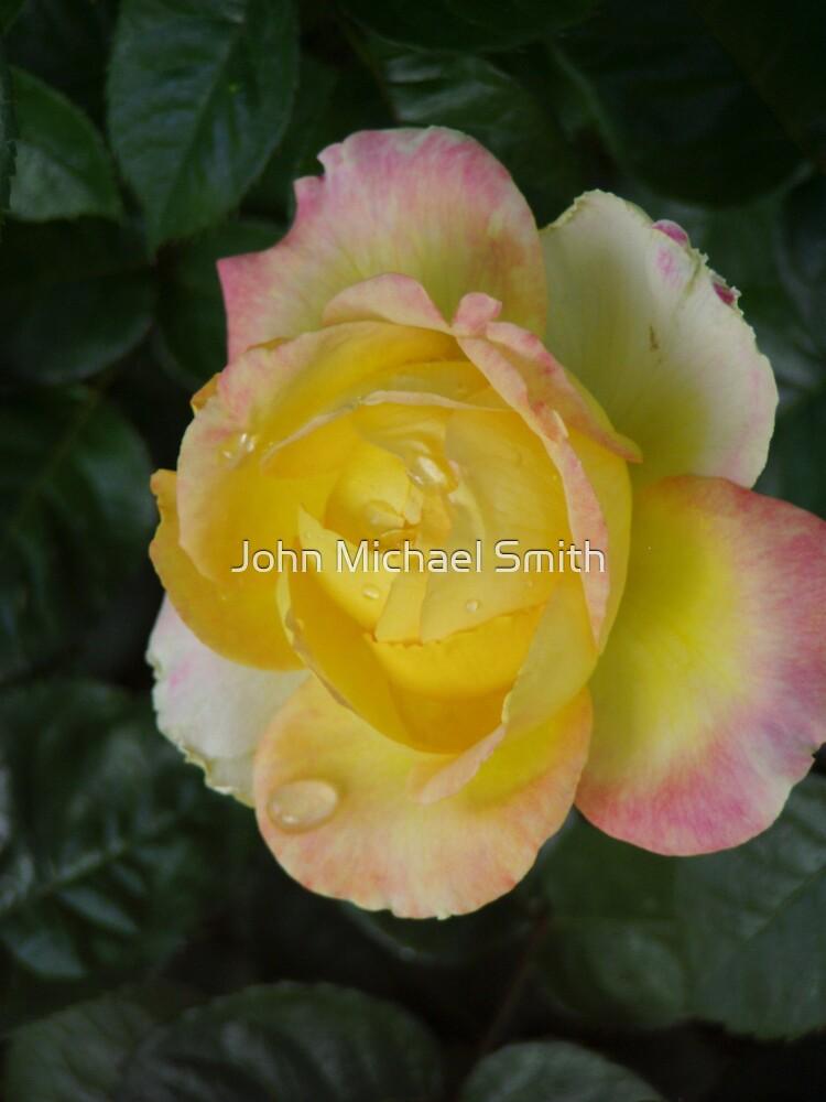 Rose Tears by John Michael Smith