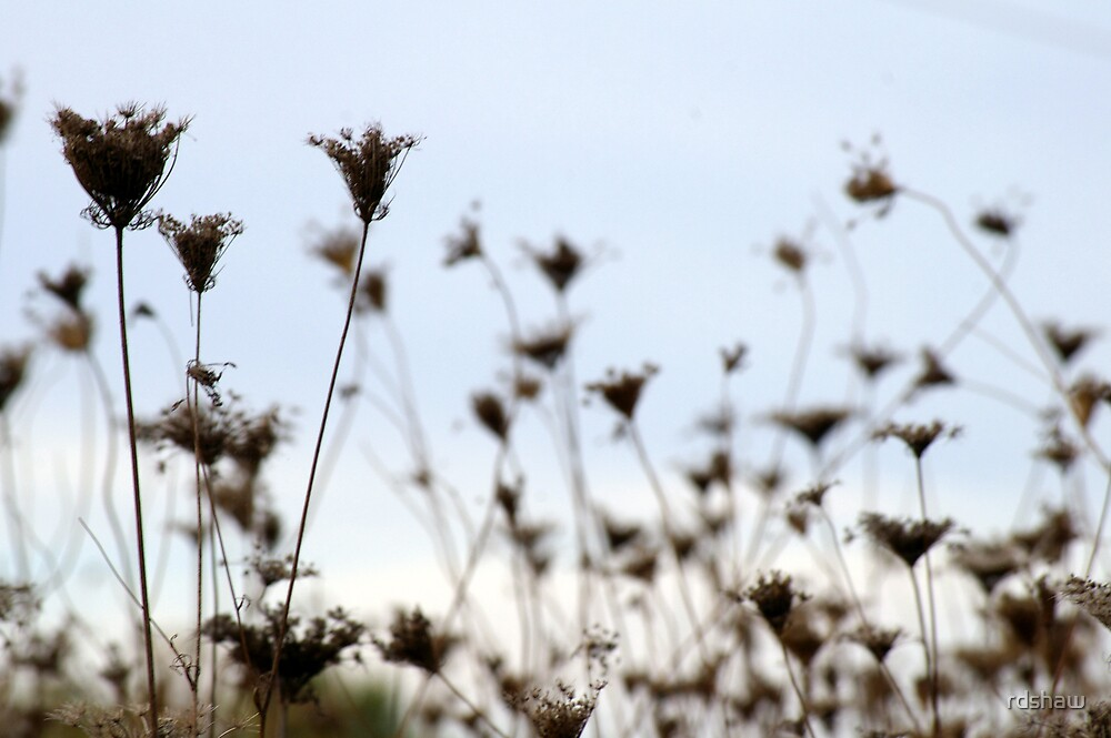 Winter Weeds by rdshaw