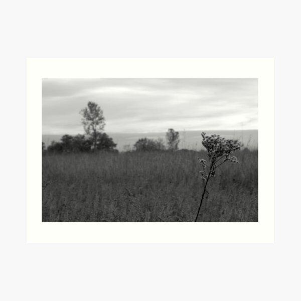 Ironweed, Meadow, Tree Art Print